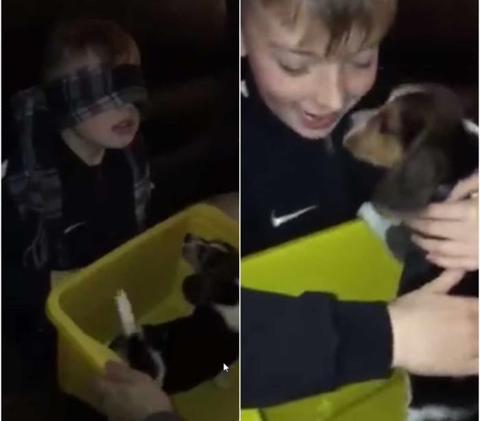 Menino comove-se ao receber cão de estimação como prenda