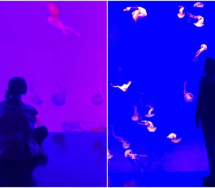 Selena Gomez e The Weeknd juntos no Aquário