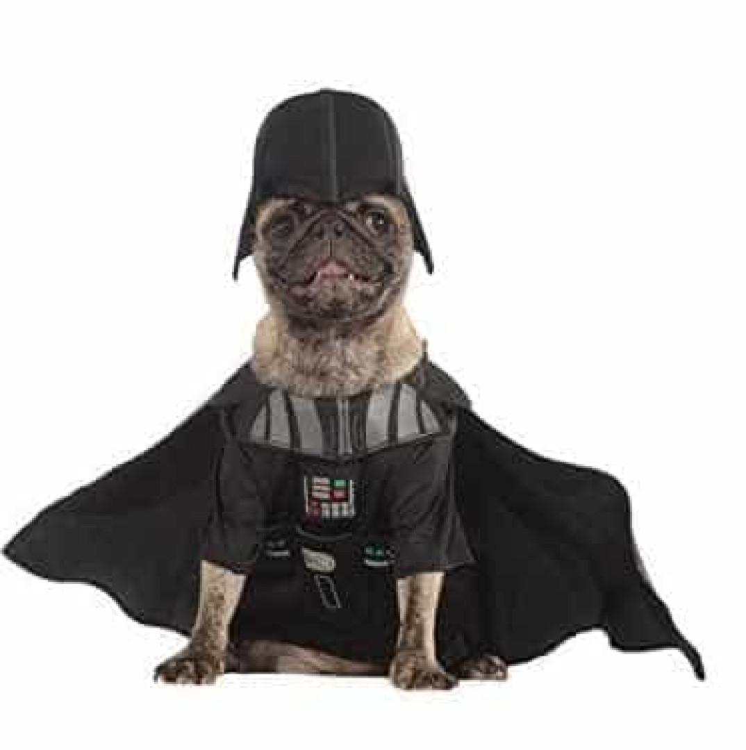 Este Halloween, o seu cão também se pode vestir a rigor