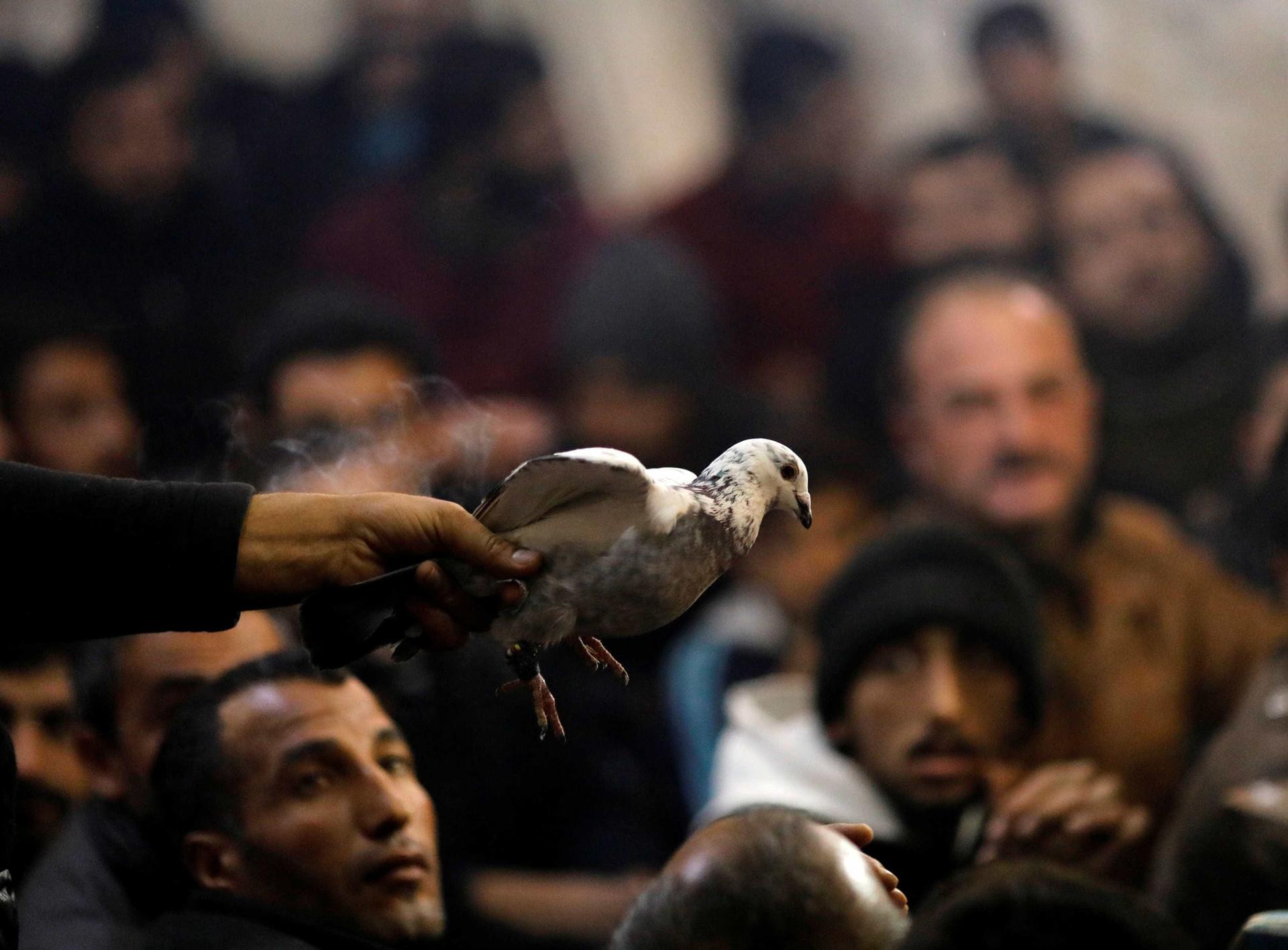 Na Turquia há quem gaste fortunas para comprar pombos
