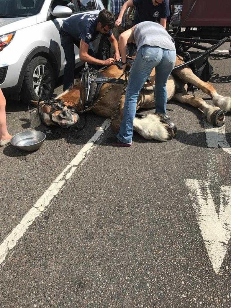 Cavalo colapsa ao puxar charrete com 17 pessoas
