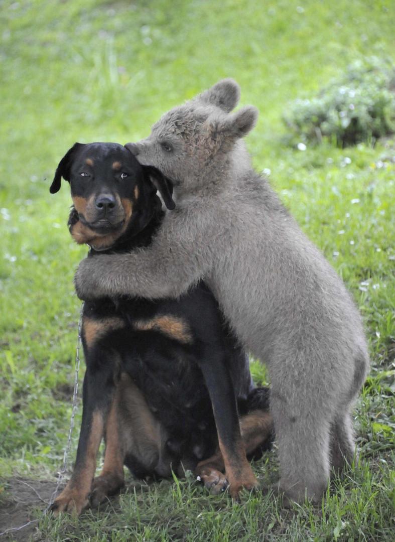 No reino animal também há amizades improváveis. Eis 23 exemplos