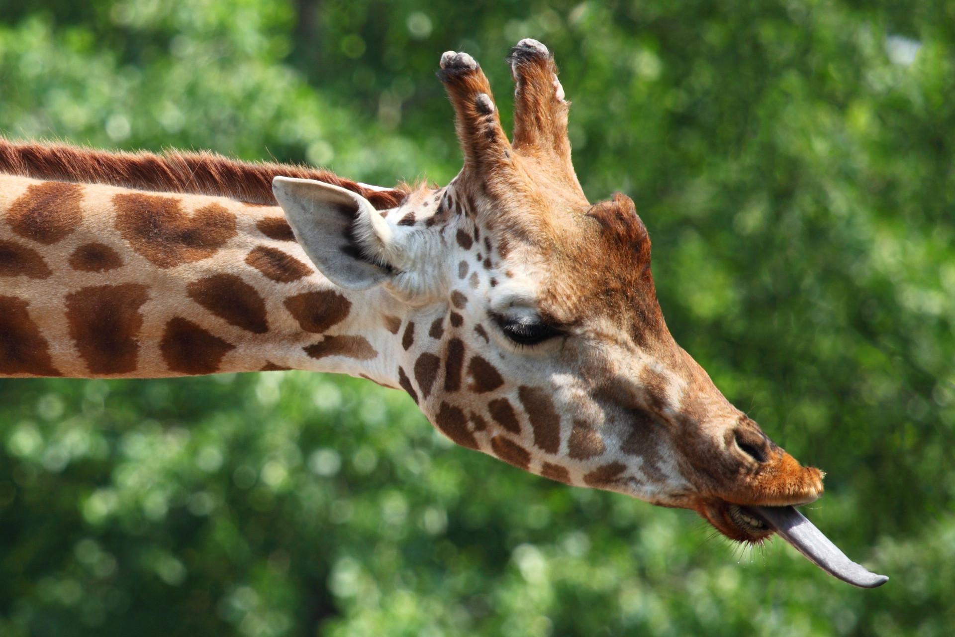 Trinta coisas que (provavelmente) não sabia sobre animais