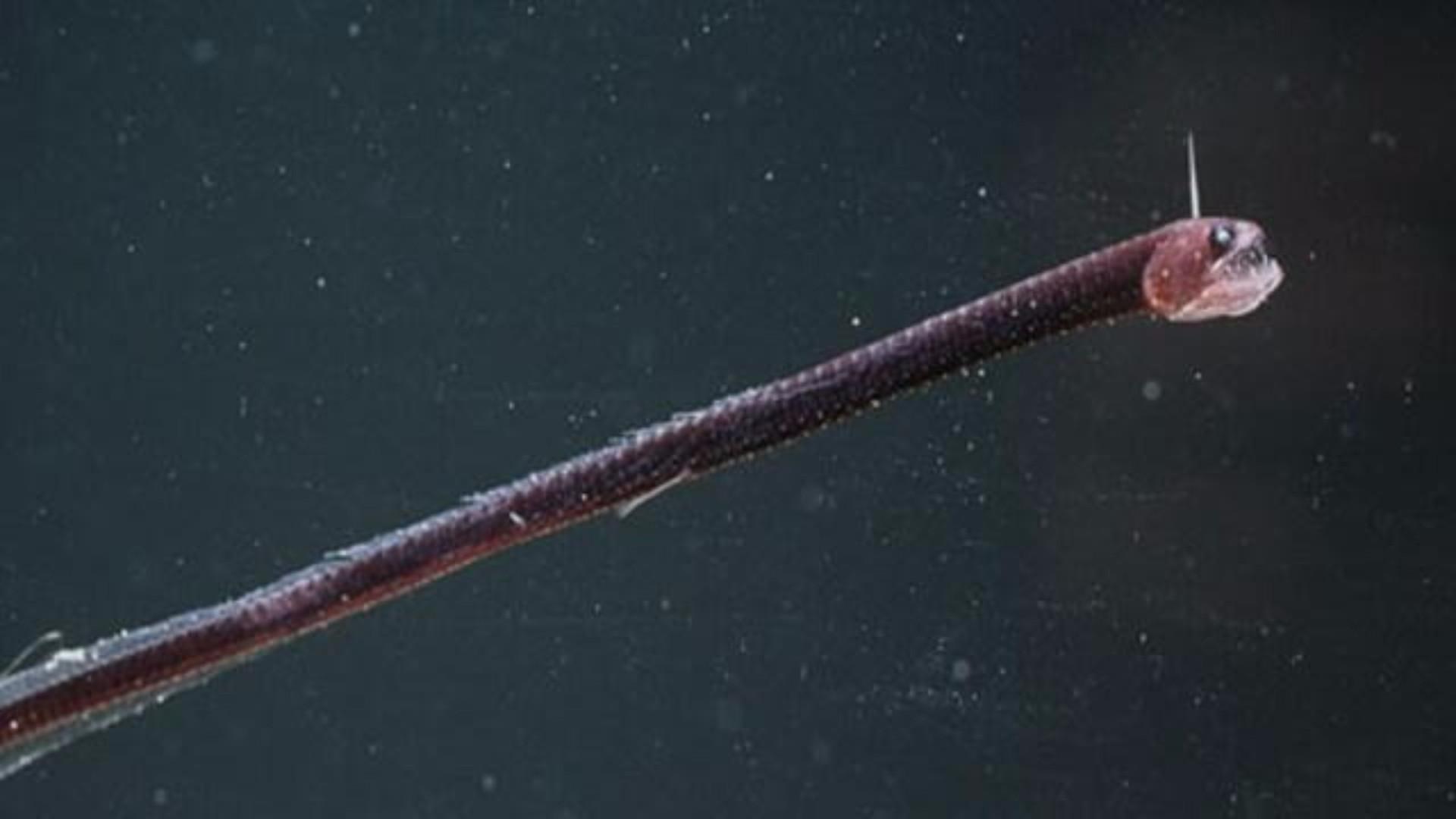 Conheça as criaturas mais aterradoras do fundo do mar