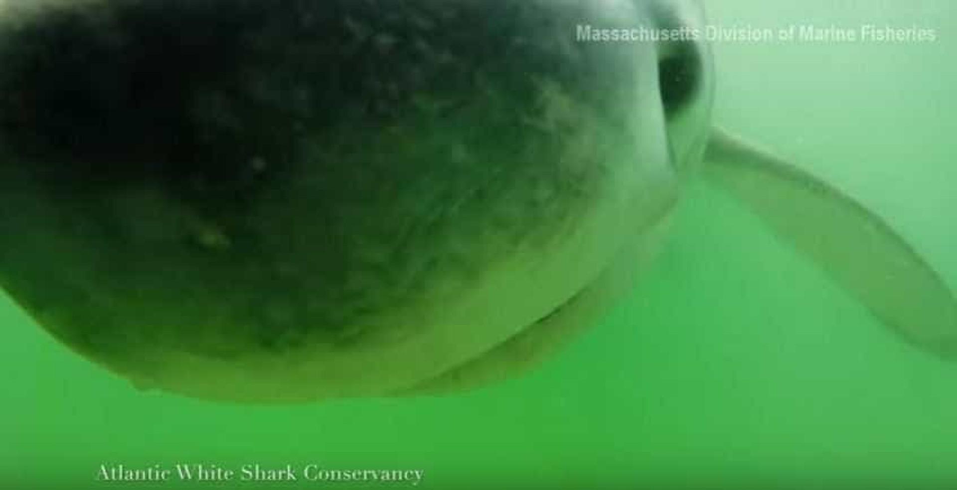 Já viu o interior da boca de um tubarão?