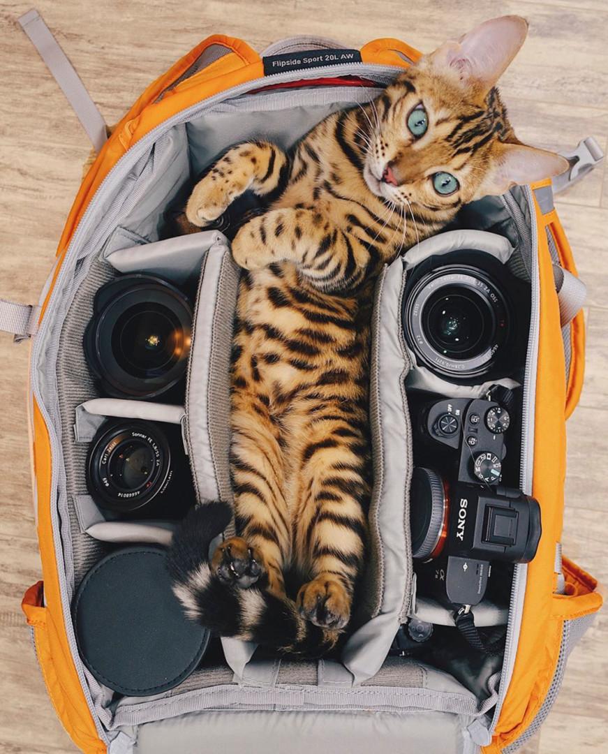 Será esta a gata mais aventureira e fotogénica do mundo?