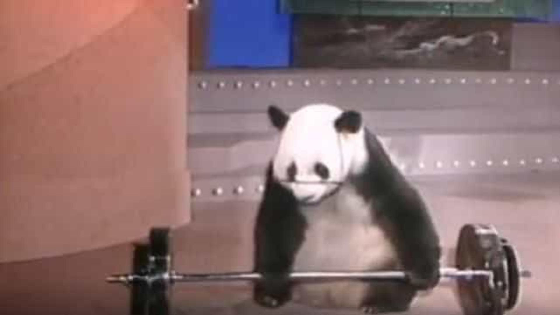 Morreu Basi, o panda 'superstar' da China