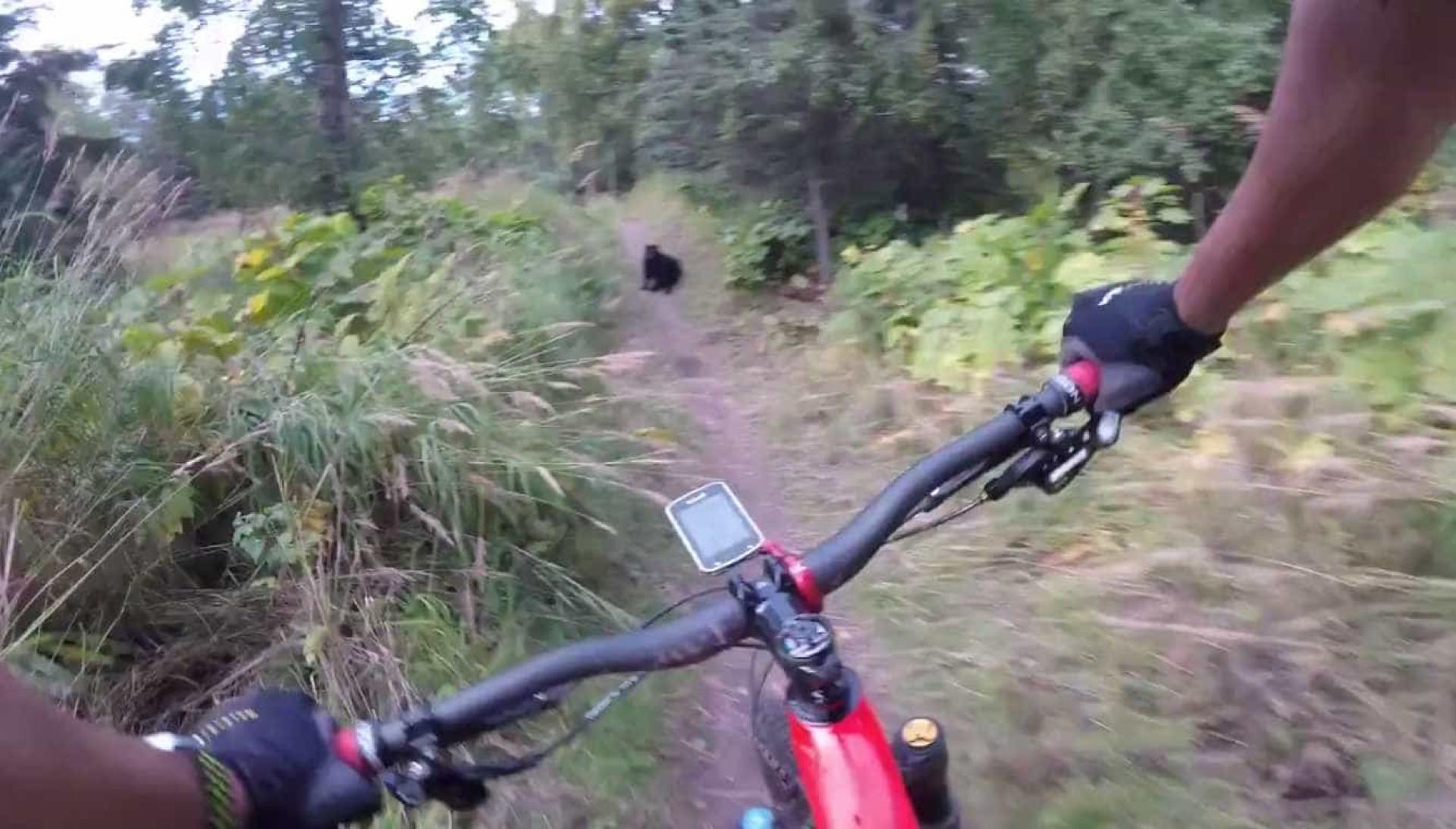 Ciclista apanha susto da sua vida ao dar de caras com urso