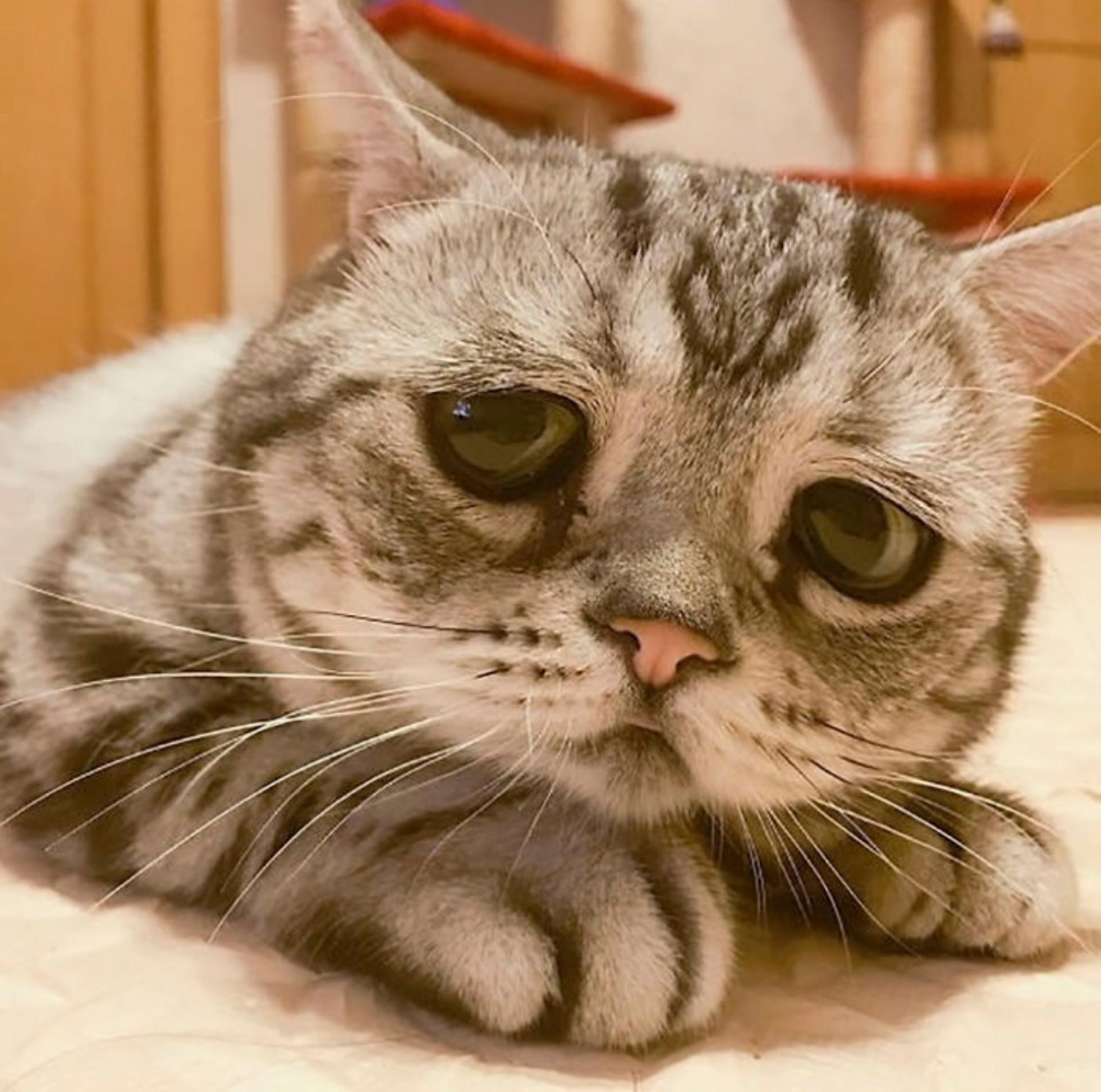Será esta a gata mais triste do mundo?