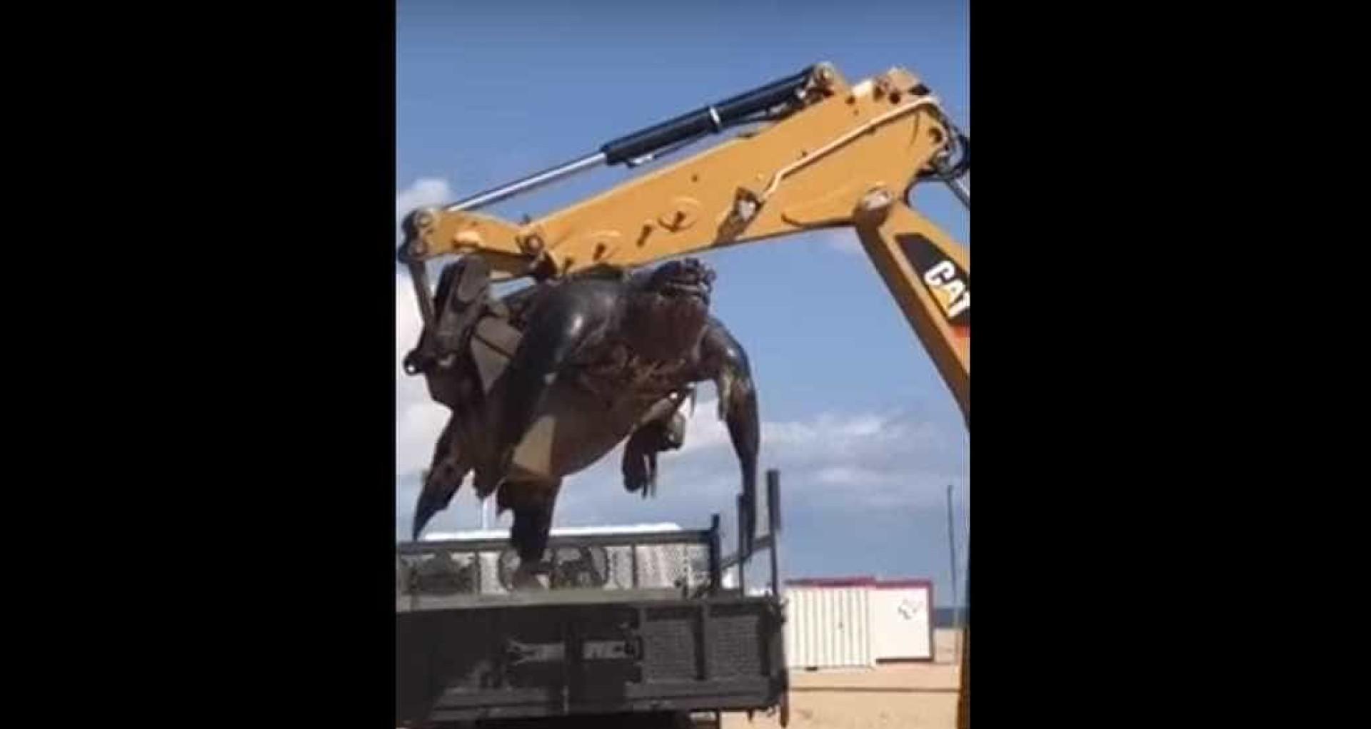 Tartaruga gigante encontrada em praia espanhola