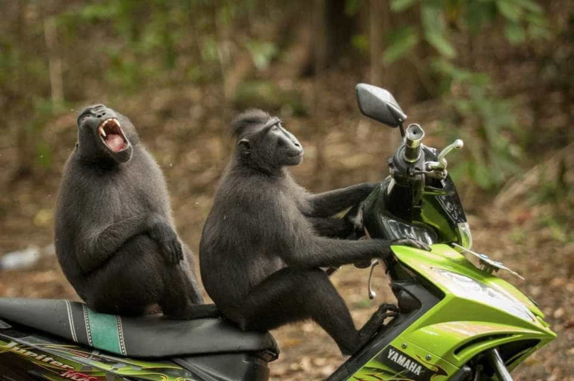 Estas são as fotos vencedoras do prémio 'comédia na vida animal'