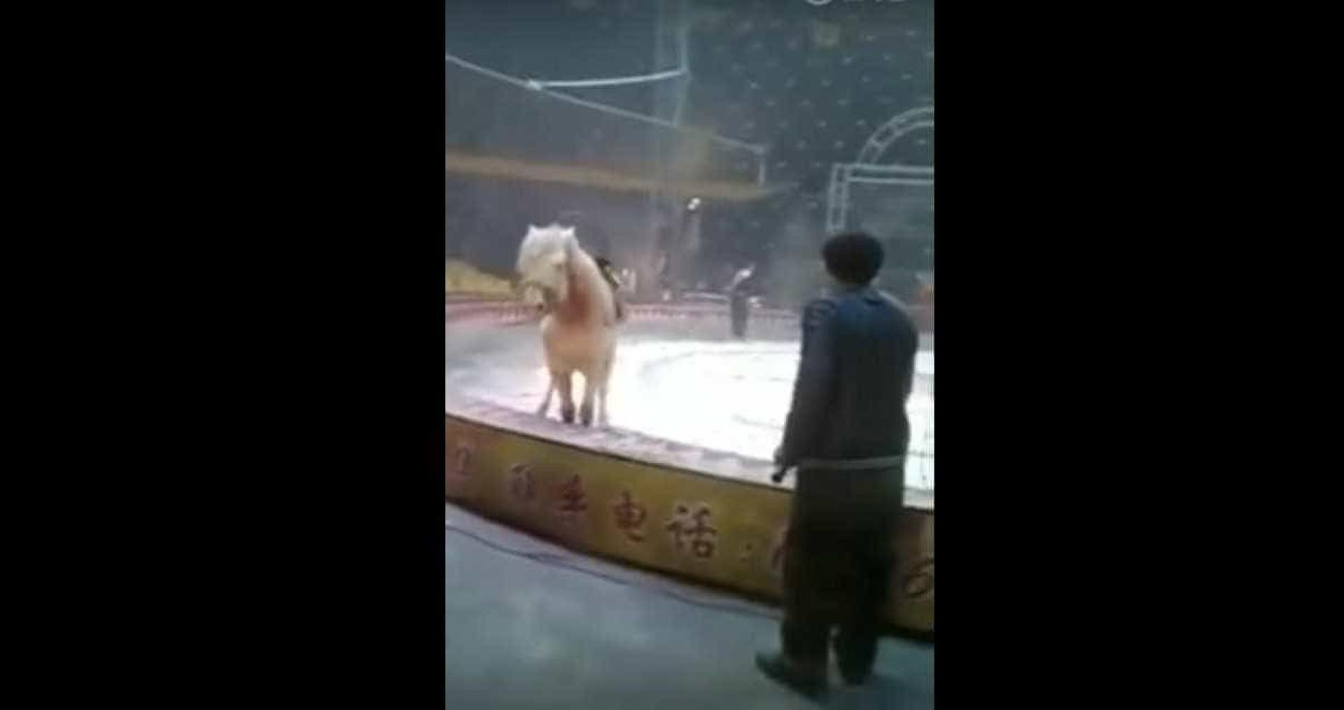 Momento chocante em que leão e tigre atacam cavalo em circo chinês