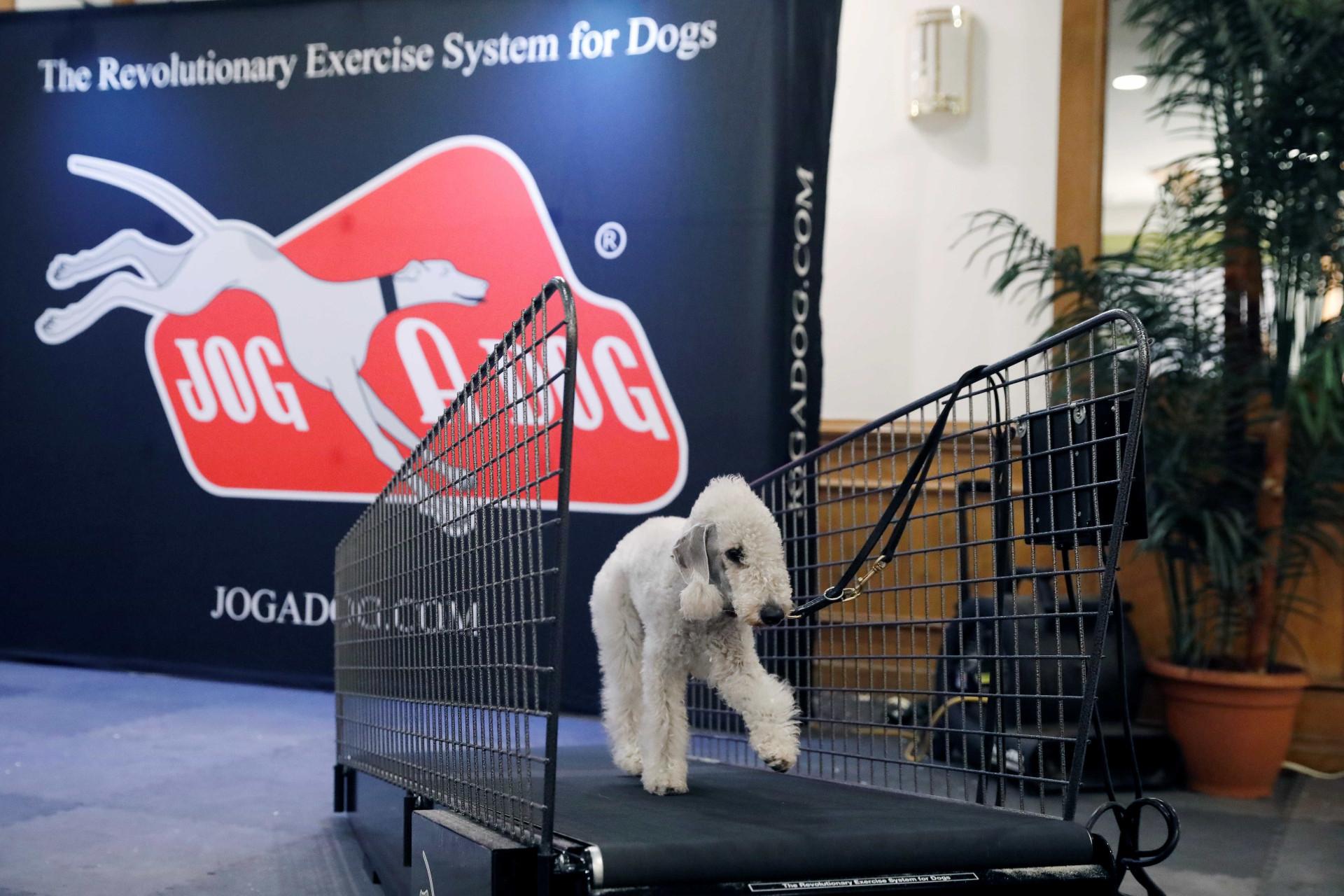 Quase três mil cães competem no maior concurso canino dos EUA