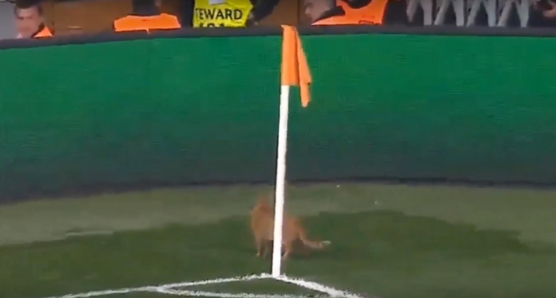 Entrada de animal em campo motivou interrupção no Besiktas-Bayern