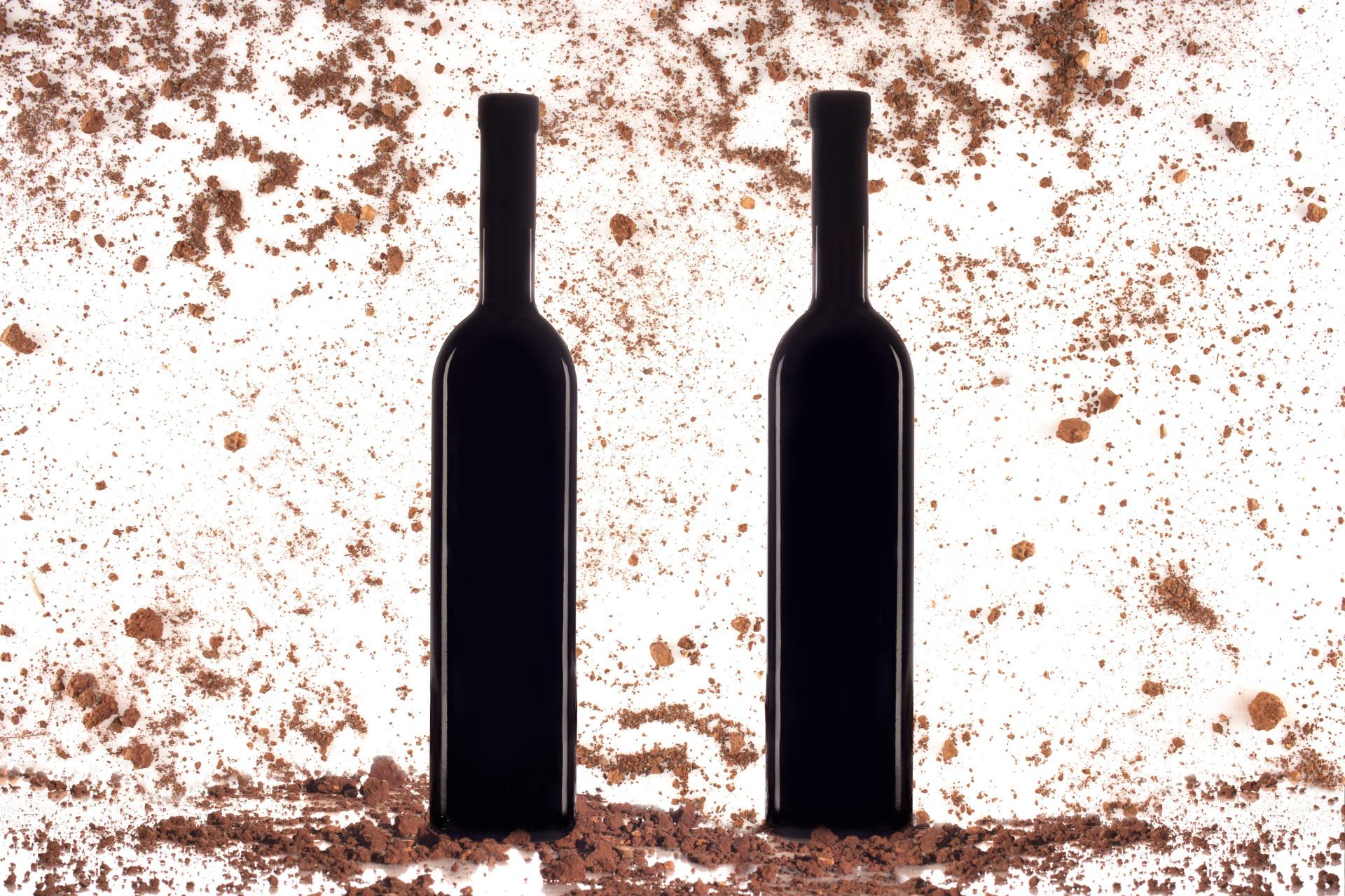 Saiba como degustar vinho como um profissional