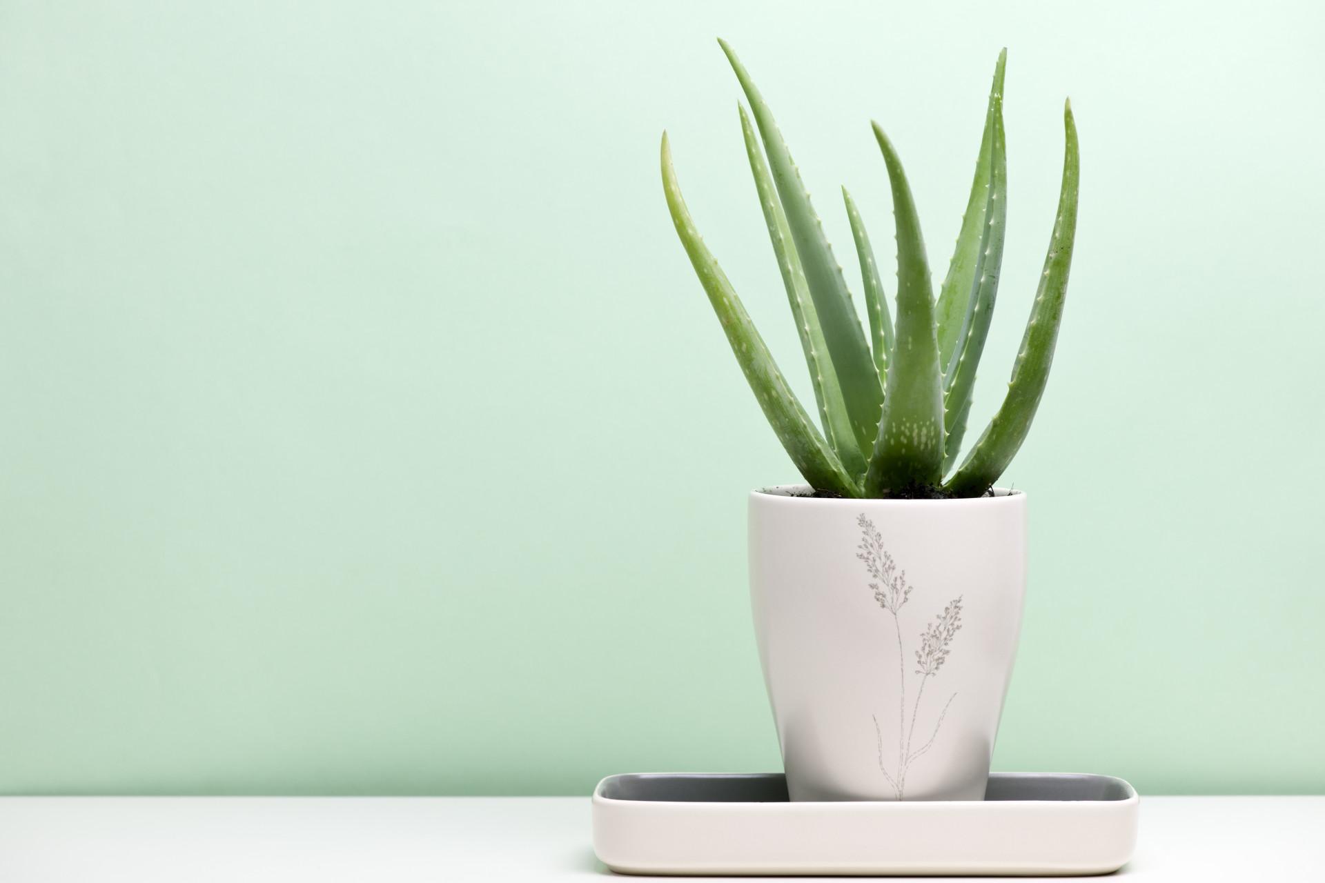 A cada signo, uma planta. Conheça a sua