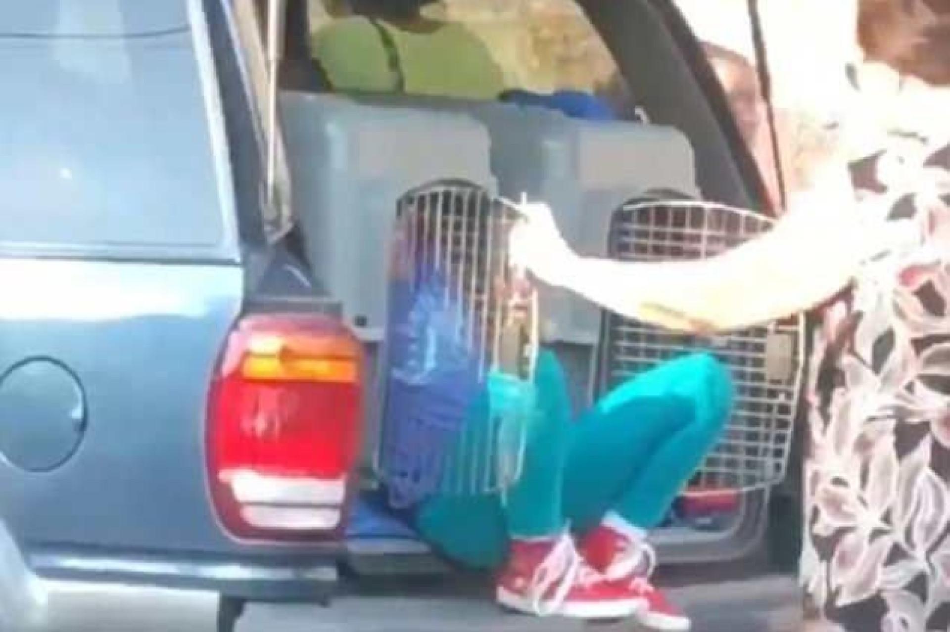 Avó detida por viajar com netas dentro de transportadoras de animais