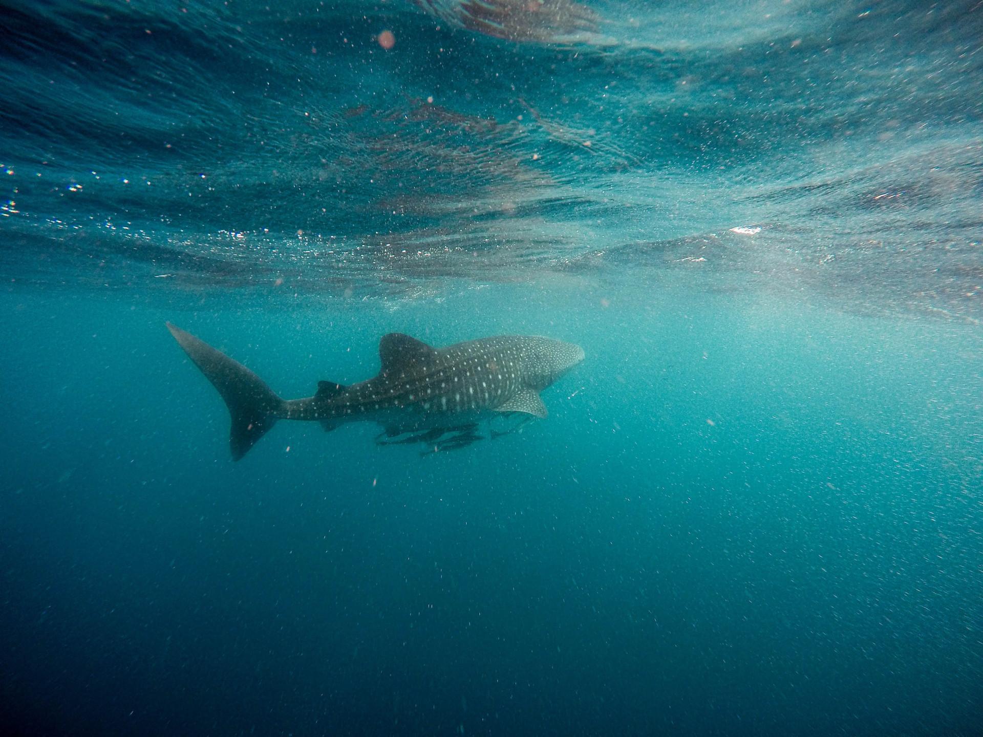 Assustador: Estes são os locais com o maior número de ataques de tubarão