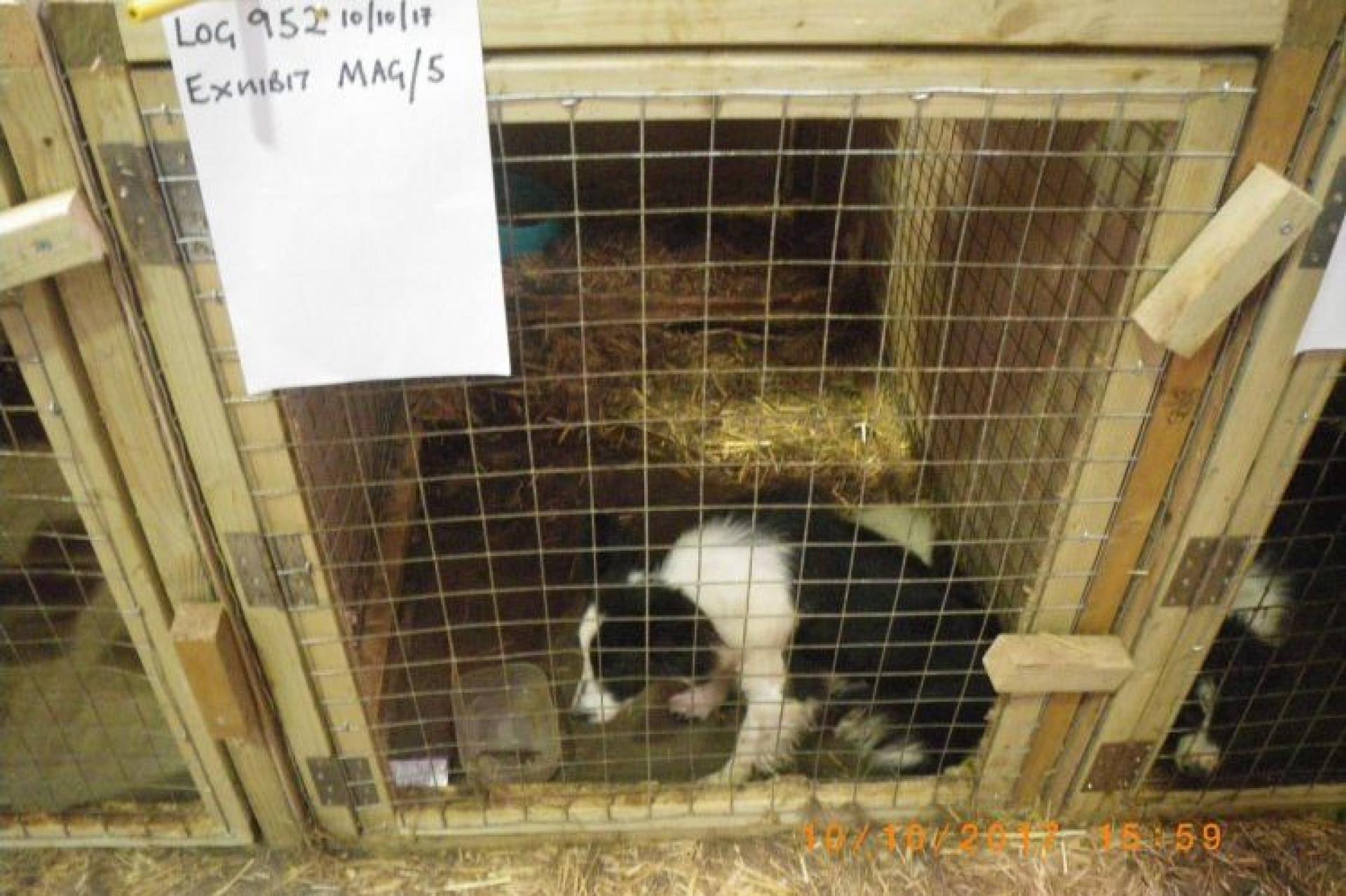 Mais de 170 animais encontrados mortos em habitação no Reino Unido