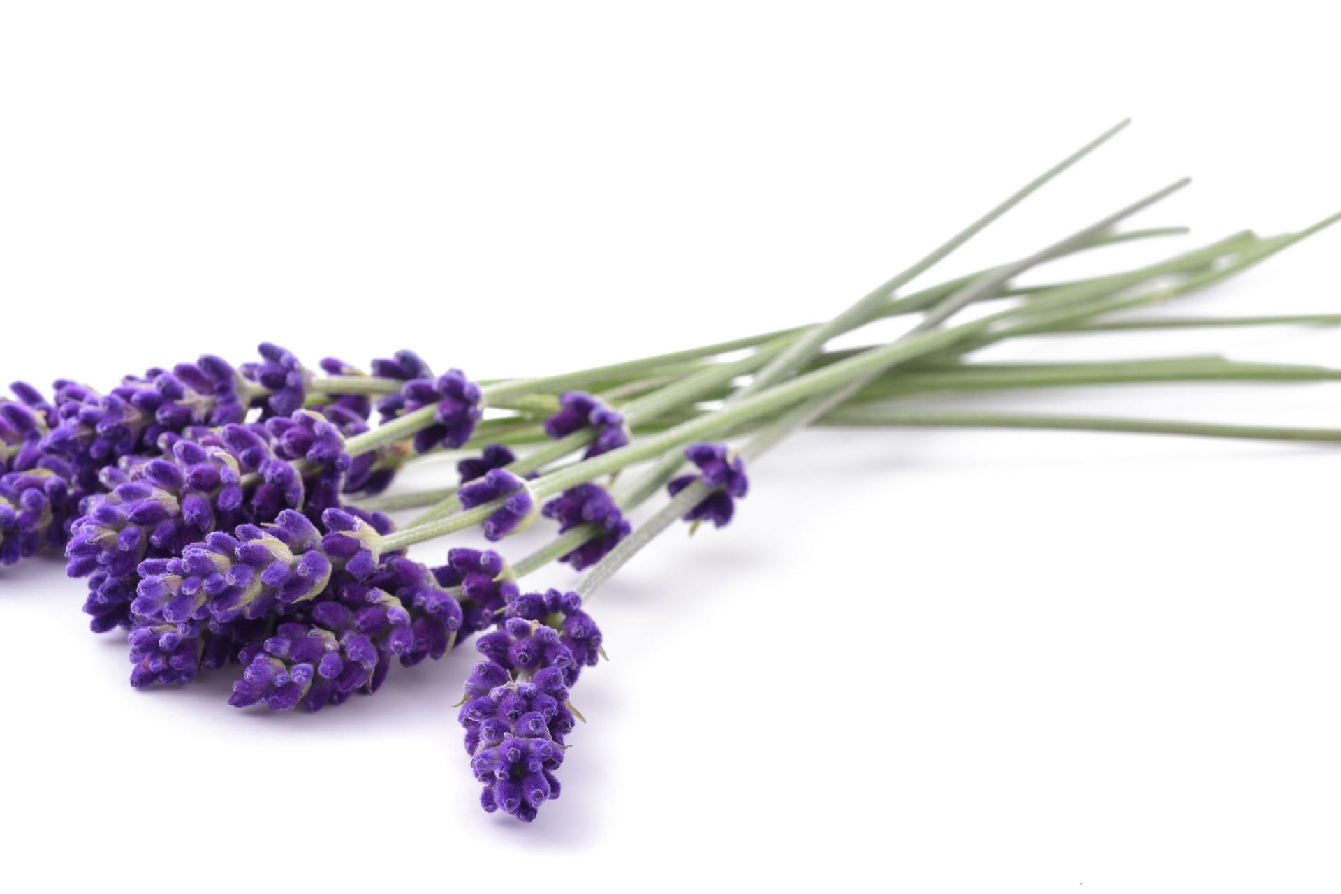 Estas plantas e flores são um repelente natural de mosquitos