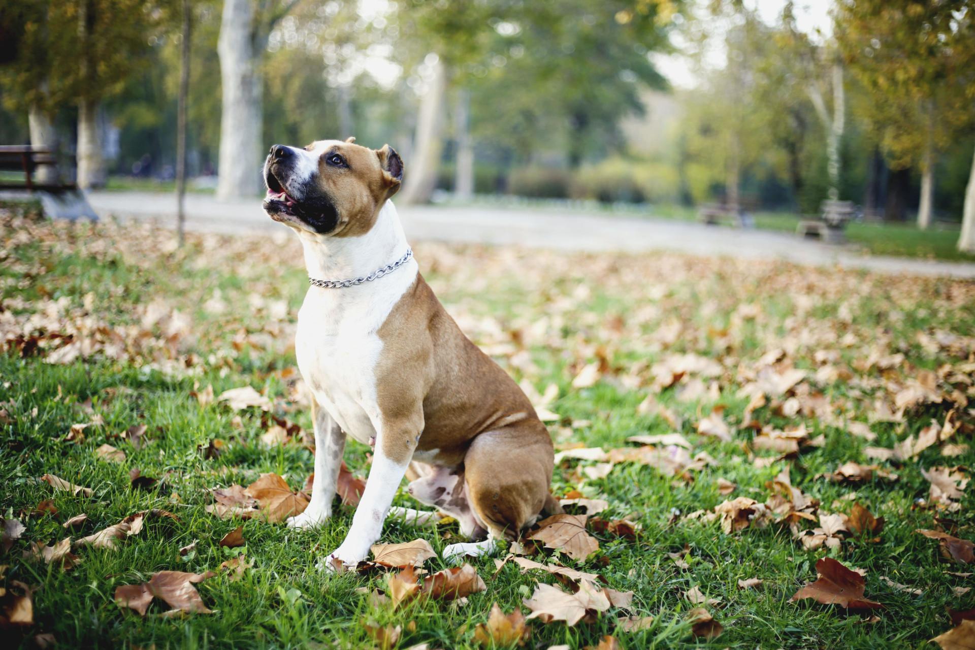 As melhores raças de cães para quem sofre de depressão