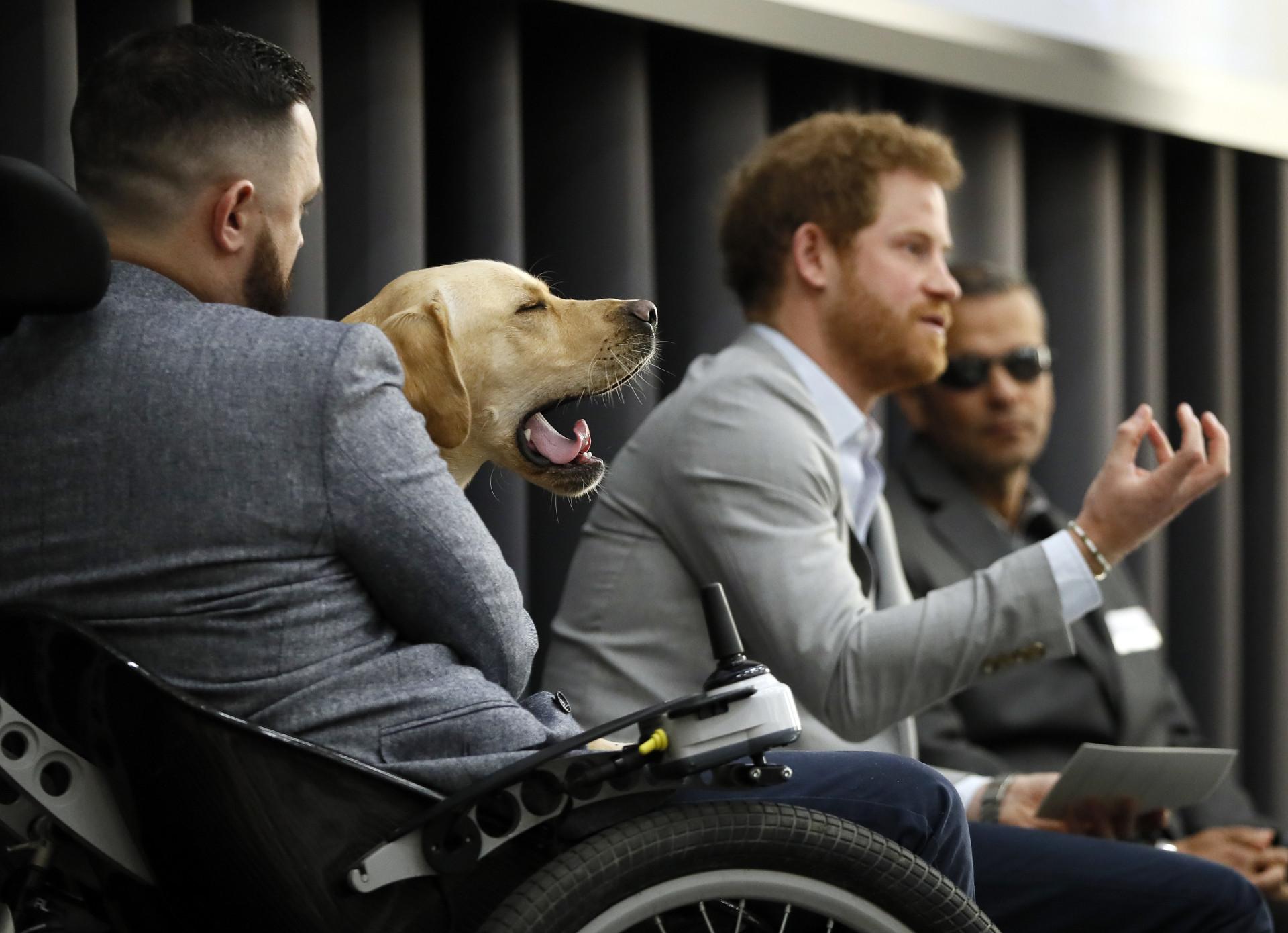 No Dia do Animal, recorde as melhores fotos de Harry com cães