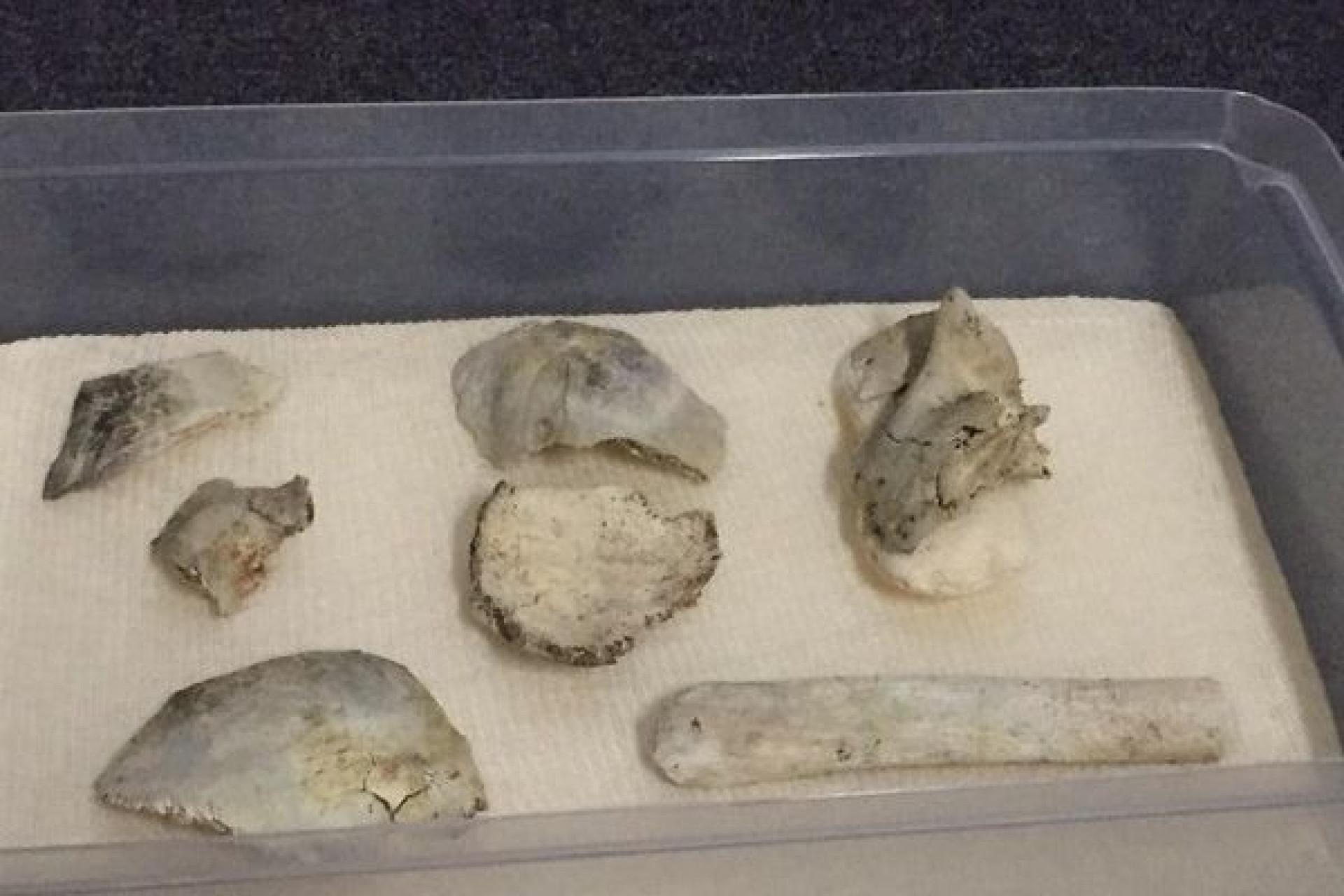 Fóssil humano mais antigo das Américas sobreviveu a incêndio no Brasil