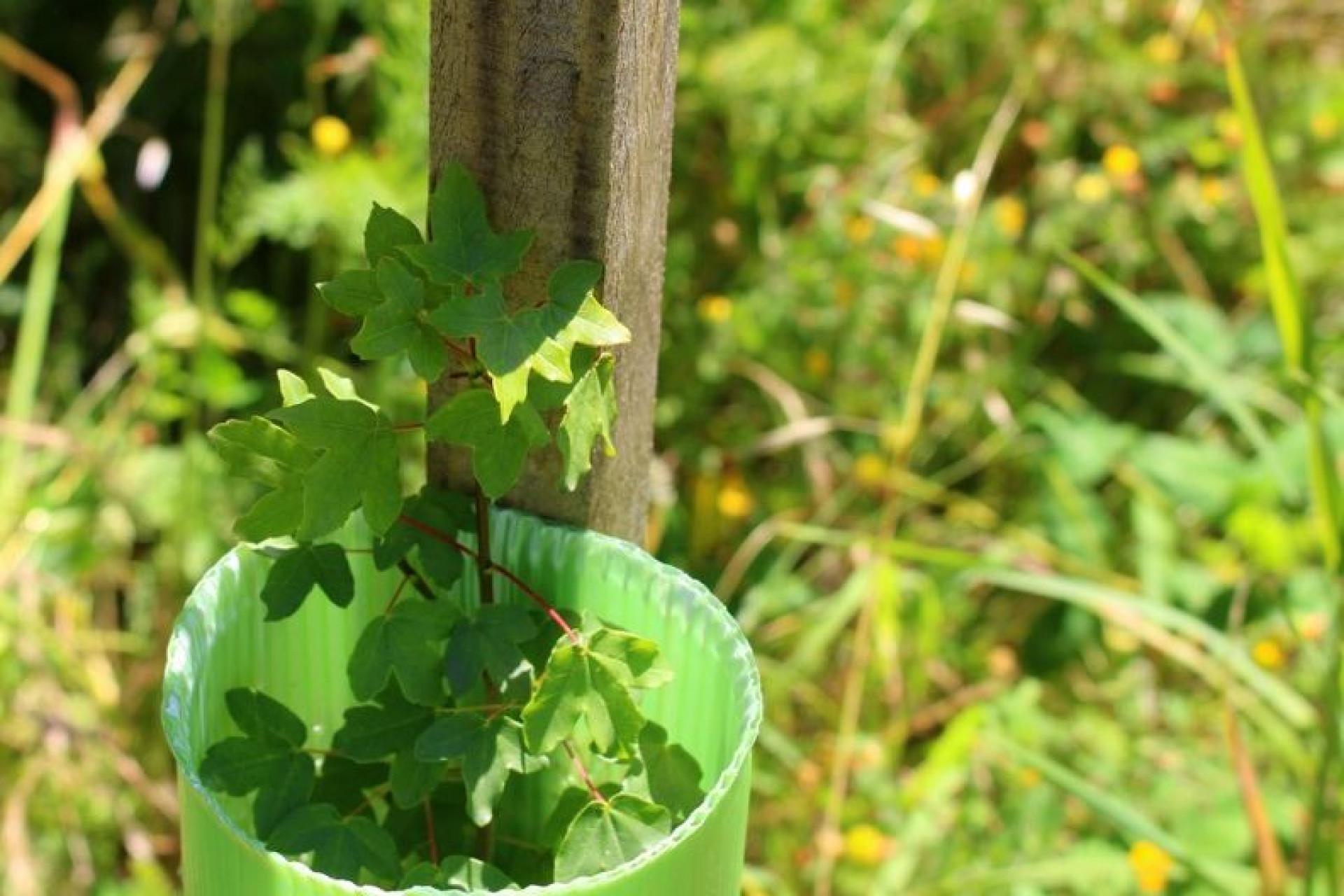 """Mulheres pelo Ambiente: A """"semente"""" que plantou mais de 100 mil árvores"""