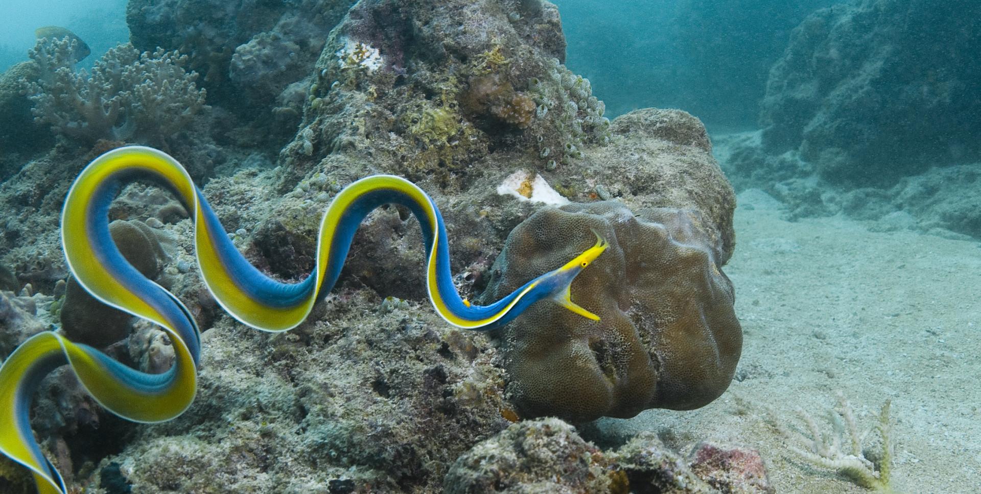 Hipnotizante: O azul vibrante dos animais
