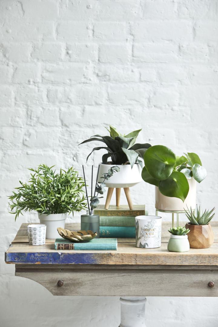 Primark Home lança coleção em honra da natureza e de espírito tropical