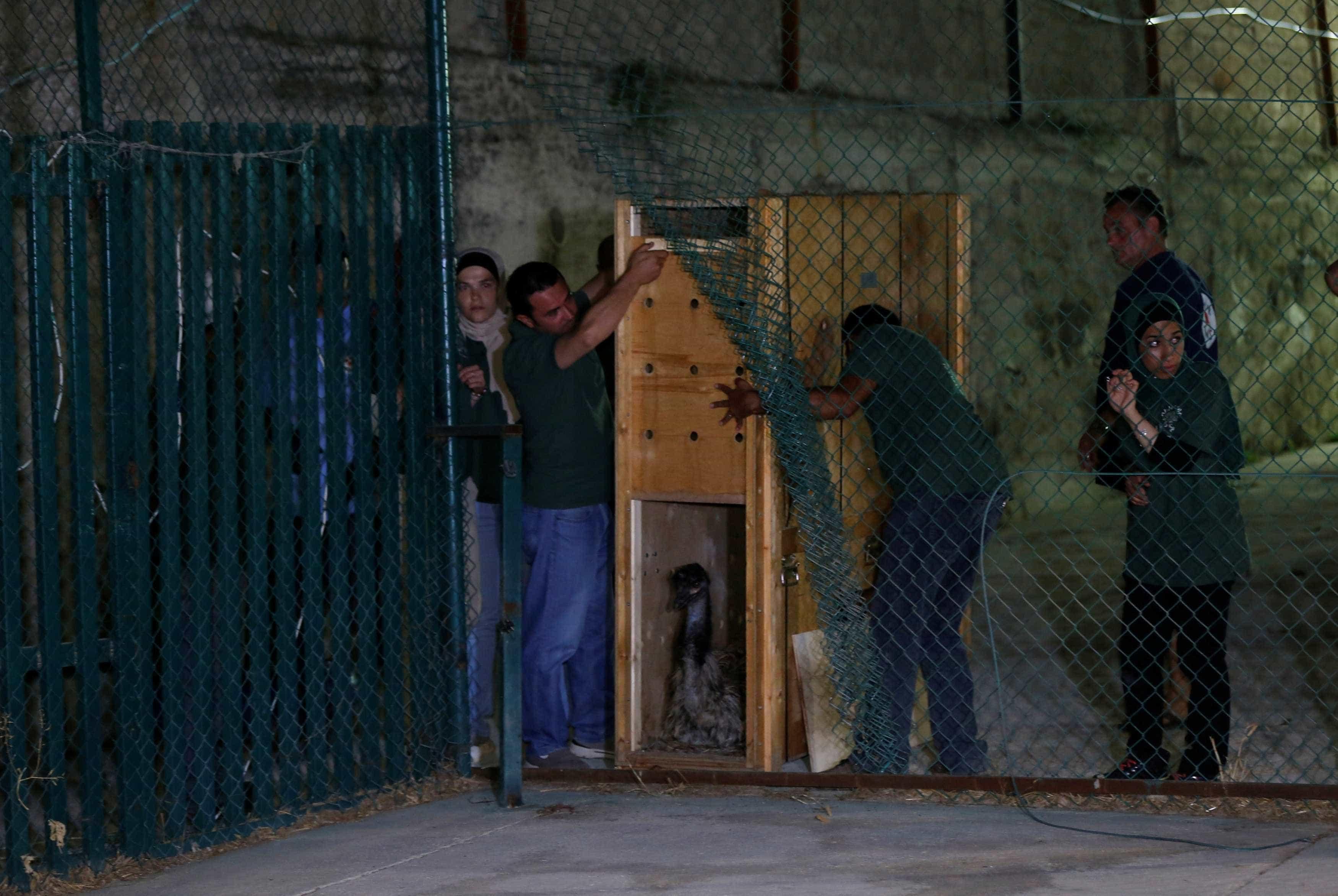Sobreviveram ao 'pior zoo do mundo'. Agora têm nova esperança
